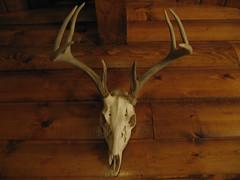 art, antler, deer, wood, trophy hunting, horn,