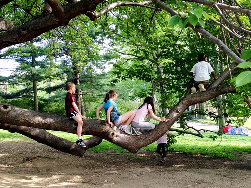 traffic jam of children on a tree branch