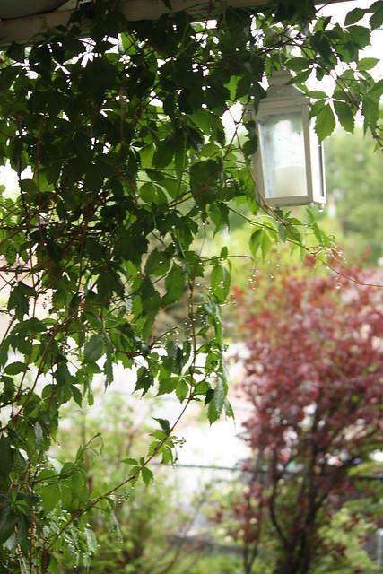 wet vines