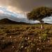 Little Karoo Boerboon (2 of 3) by Panorama Paul