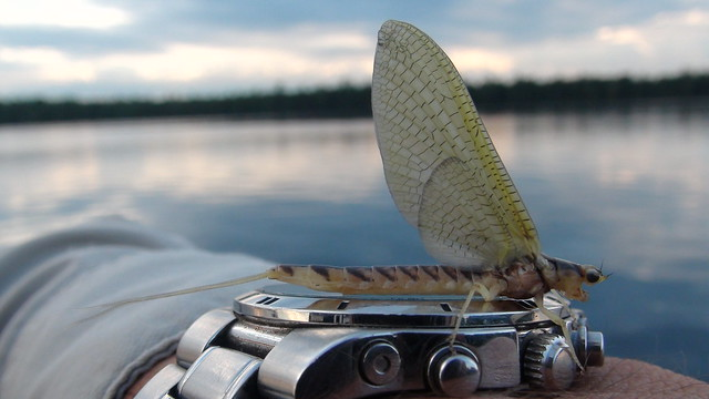 Hex Fishing Time is here!