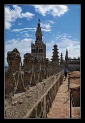 0515 giralda cubiertas catedral sevilla