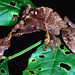 Satanic Leaf Tailed Gecko (Uroplatus phantasticus) by cowyeow