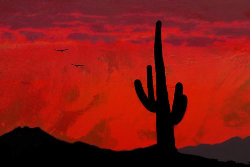 sunset red arizona cactus sky cloud texture sundown saguaro colorphotoaward bestcapturesaoi blinkagain bestofblinkwinners