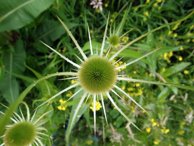 nature-walk_4870-090712