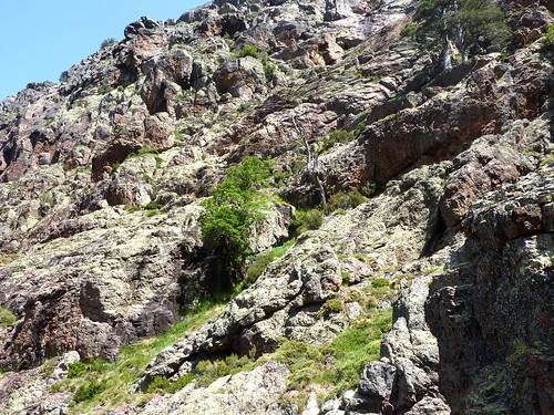 Début de l'éperon de la descente de la falaise : à gauche au-dessus l'arbre mort et à droite les pins de la brèche