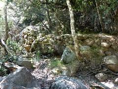 Le vieux sentier en RD en amont de la brèche du Carciara : encore de beaux soutènements