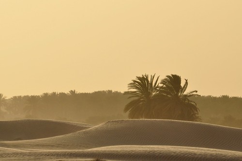 Oasis,sandstorm and sunset. Sahara