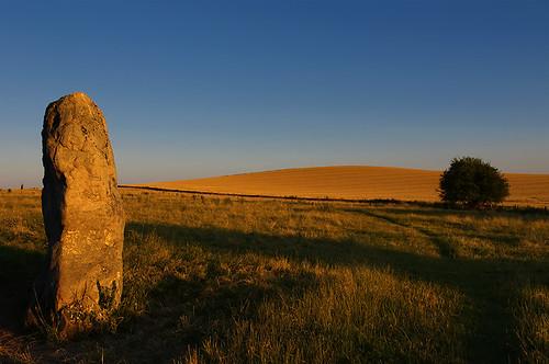 sunset tree stone avebury