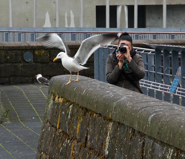 Shooting birds