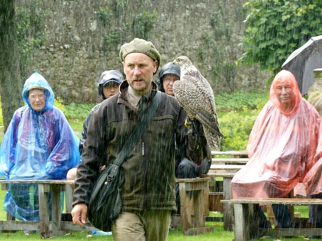 Falconry Exhibition, Dunrobin Castle