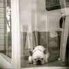 Sleepy Dog 1 by Adrienne Johnson SF