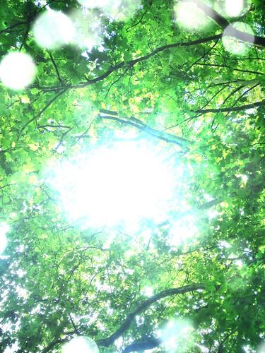 無料写真素材, 自然風景, 樹木, 森林, レンズフレア, 緑色・グリーン