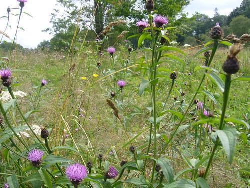 Wild Flowers 1080035