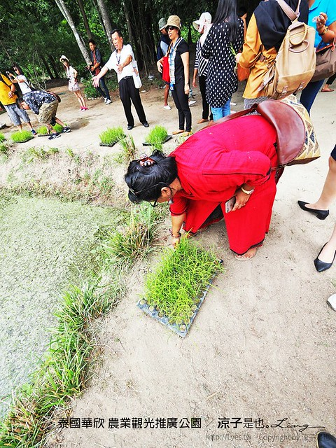 泰國華欣 農業觀光推廣公園 28