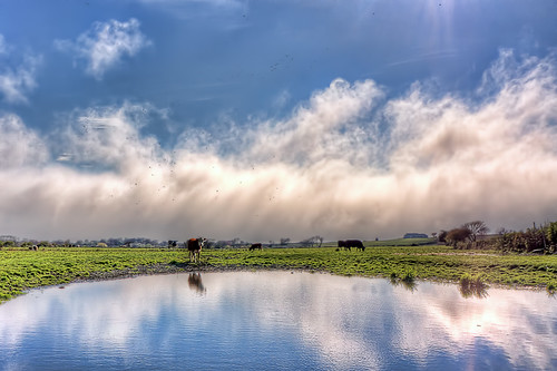 Cows On a Farm by mike_dooley via I {heart} Rhody