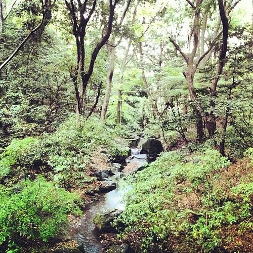 Parque Yoyogi #tokyo #japan #Yoyogi