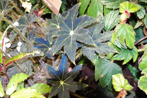 特別植物in未來館