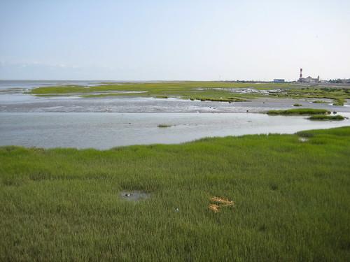 高美溼地上的雲林莞草。(圖片來源:台中市政府農業局)