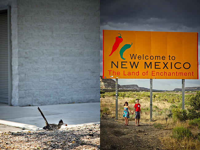New Mexico Welcome Sign & Animal / Road runner | Cross Country Roadtrip | 50 States Photography Challenge