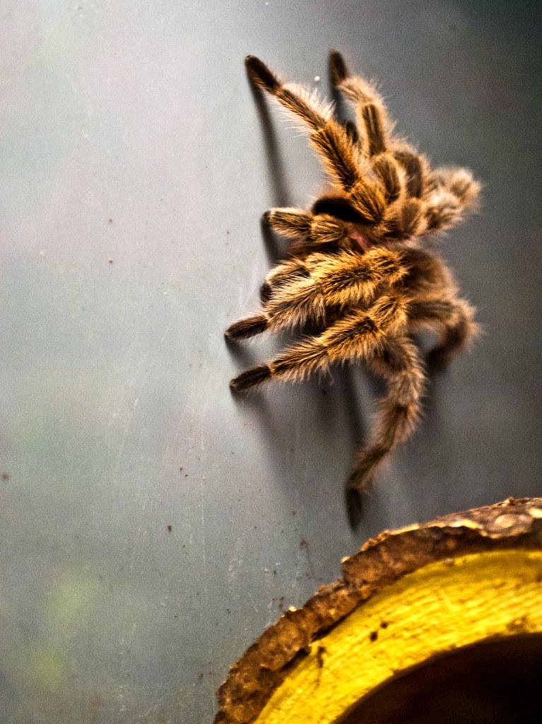 365-309 Spider