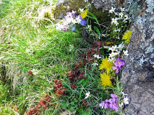 After = Fairy Garden