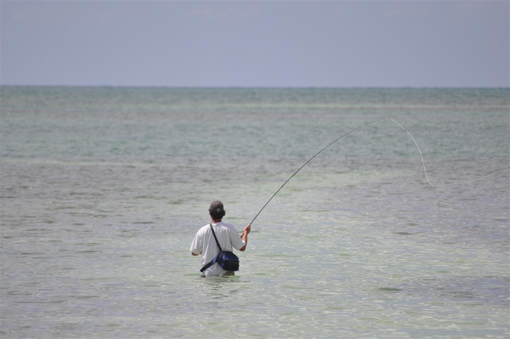Pescador practicando la pesca en las cristalinas aguas de Islamorada florida keys, carretera al paraíso (mejor con un mustang) - 7214504352 76f9782887 o - Florida Keys, carretera al paraíso (mejor con un Mustang)