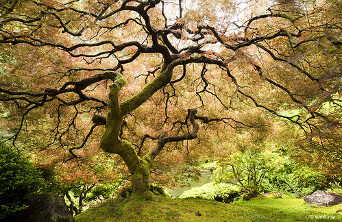 Tree of Life, Portland Japanese Garden