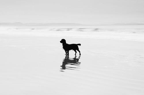 無料写真素材, 動物 , 犬・イヌ, モノクロ, シルエット