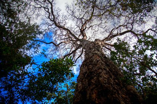 forest hawaii bigisland