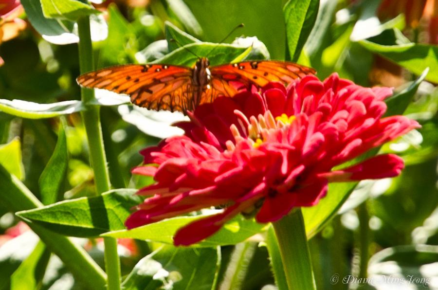Summer Colors | Huntington Gardens