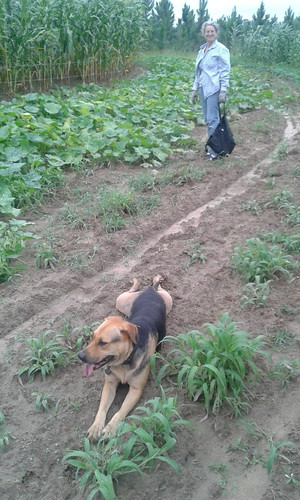 Brown Dog guarding weeds