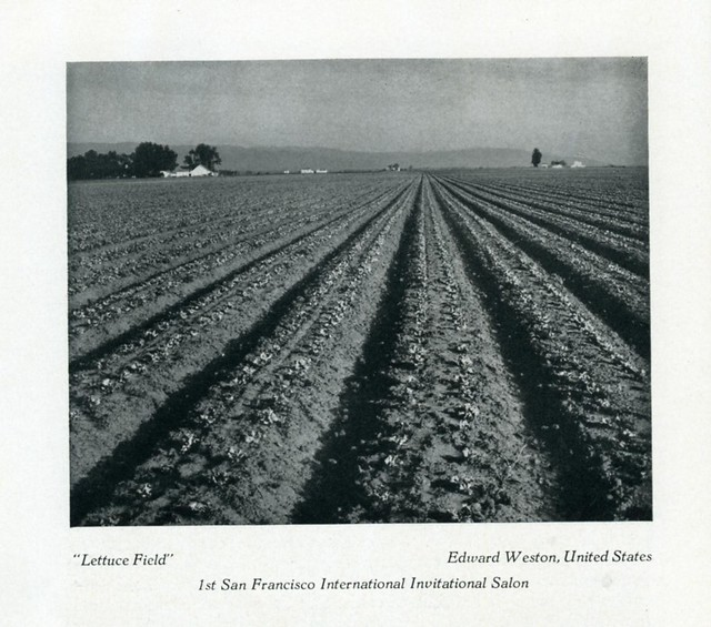 """Lettuce Field"", Edward Weston, United States. 1937"