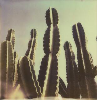 365 3.0/051 Cactus