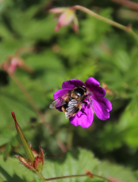 Purple flower with busy bee.