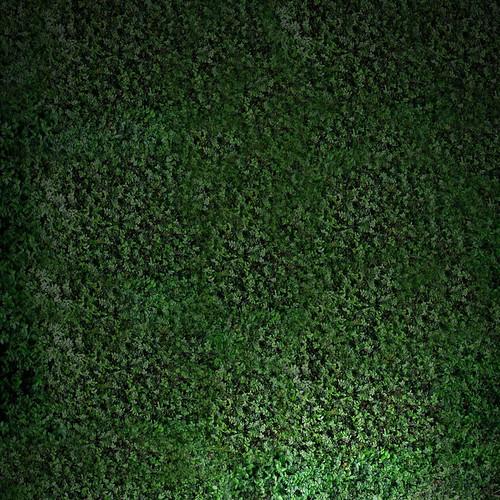 [フリー画像素材] 花・植物, 草原・草, 緑色・グリーン ID:201207120600