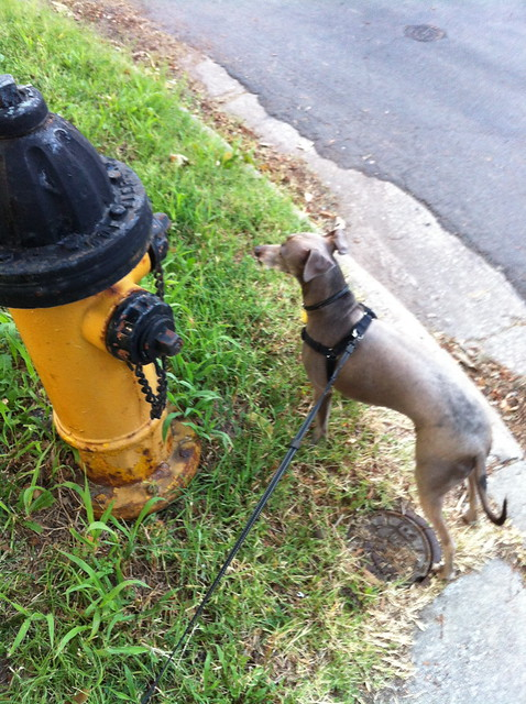Fire Hydrant Dog Grooming Shop Names