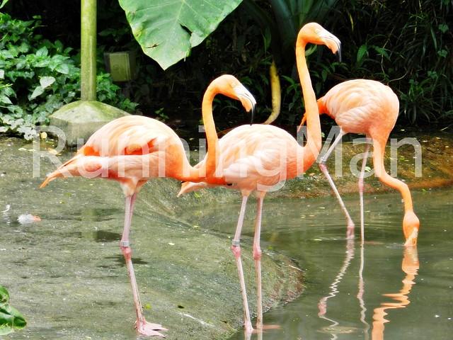 Jurong Bird Park 02