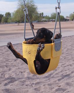 DHDR Puppies Cuda Heiko and Von