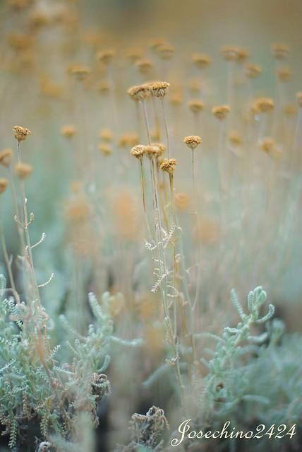 Florecillas amarillas en verano
