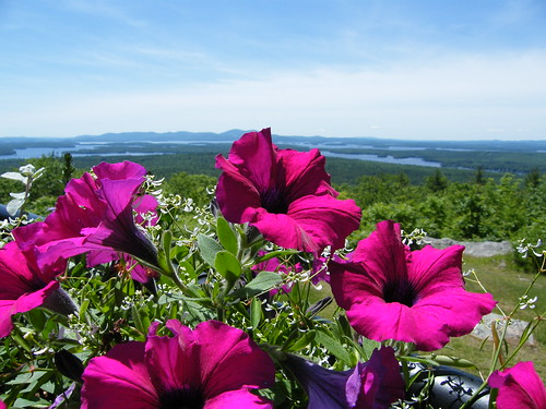 Pink Flowers with View