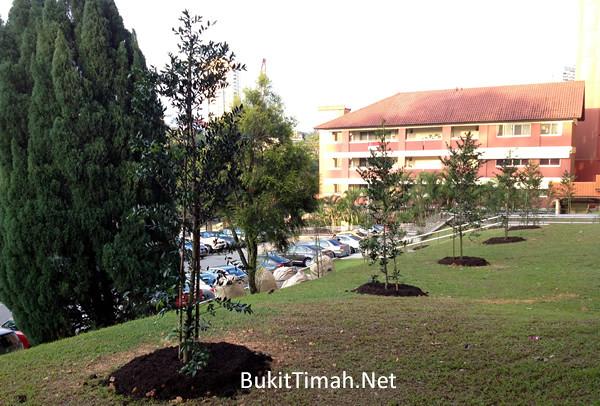 Instant Trees