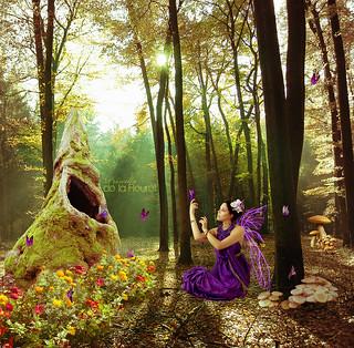 Butterflies friend in forest
