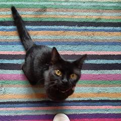 Tiny cat demands fussing.