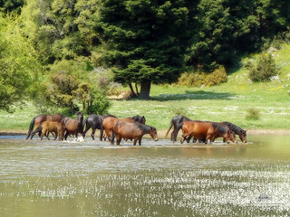 Horses in Nevropolis Lake