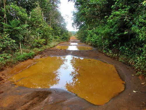 road southamerica forest scenery colombia view mud lowlands culture blackwater whitesand mitu amazonbasin neotropics vaupes