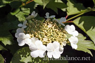 tuesday_garden_43012_5