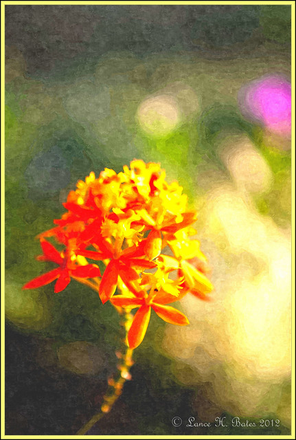 FotoSketcher - 20110206 Flower oil painting