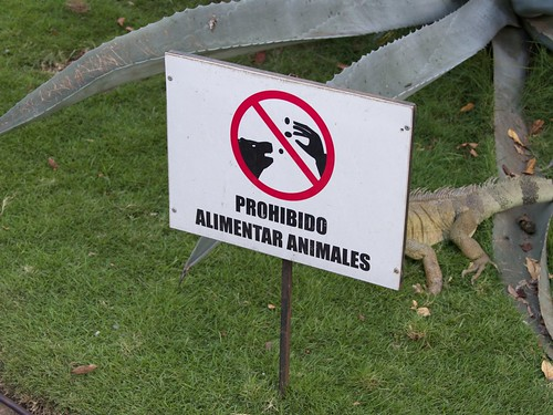 Iguanas 20