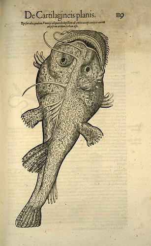 010-Icones animalium- (1553)- Conrad  Gesner- SICD Strasbourg